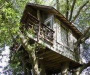 150TreehouseSF.jpg (180150)