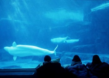 Vancouver Aquarium - Family Sleep Overs