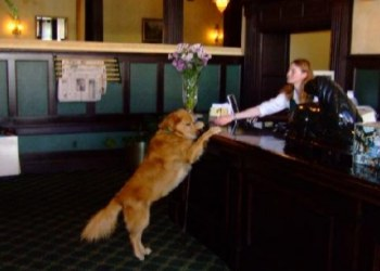 Geiser Grand Hotel Pet Friendly