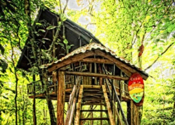 The frog treehouse in Costa Rica
