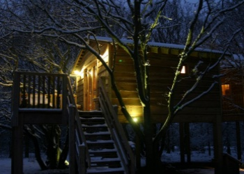 Into the woods treehouse at night