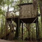 hostel-in-the-forest-Treehouse