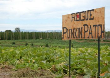 Rogues Punkin Patch and Hop Fields near the Hop N Bed