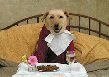Bed And Breakfast Maine Dog Friendly