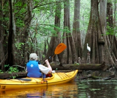 Edisto River Kayaking