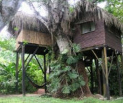 Parrot Nest Treehouse - Belize
